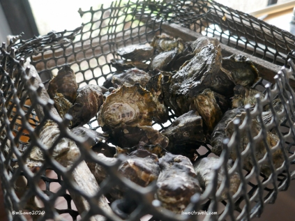 Oysters right out of the water - very salty before they wash them