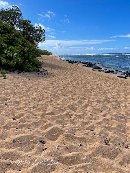 Larsen's Beach